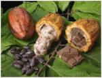 el cacao como materia prima