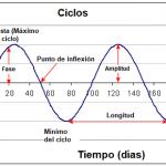 Análisis de Ciclos en los Mercados